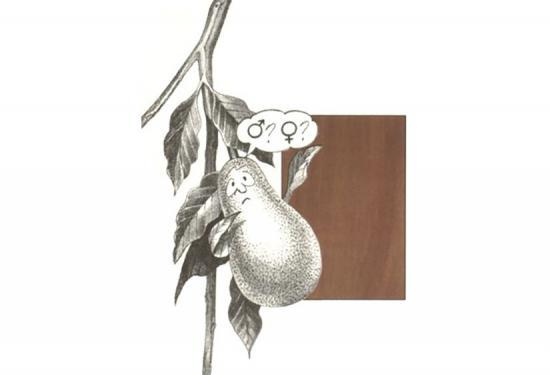 www.woodmagazine.com